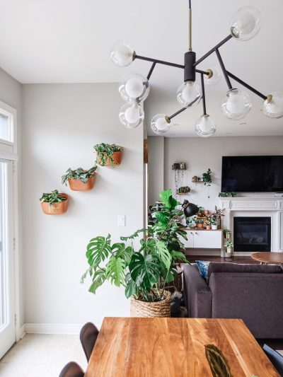 Styled plant wall